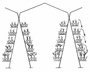 Выращивание томатной рассады на гидропонной системе