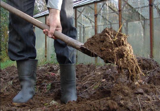 Правильная подготовка почвы для рассады залог хорошего урожая
