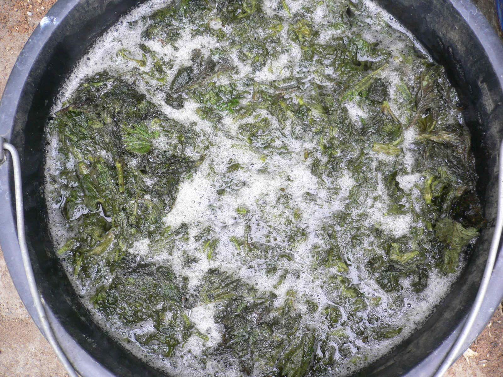 Подкормка растений настоем из крапивы