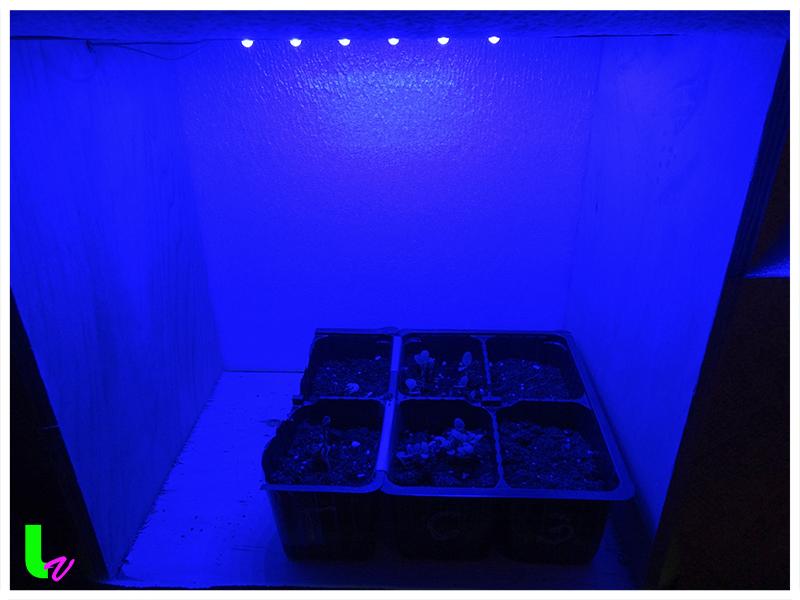 Влияние синего спектра освещения на развитие растений