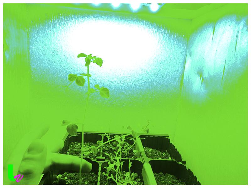Влияние зеленого спектра освещения на развитие растений