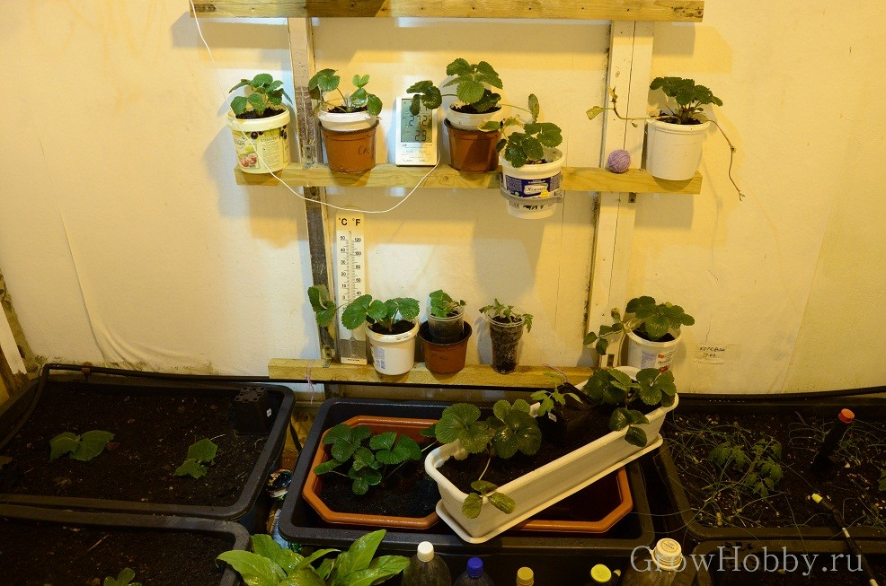 Grow Room