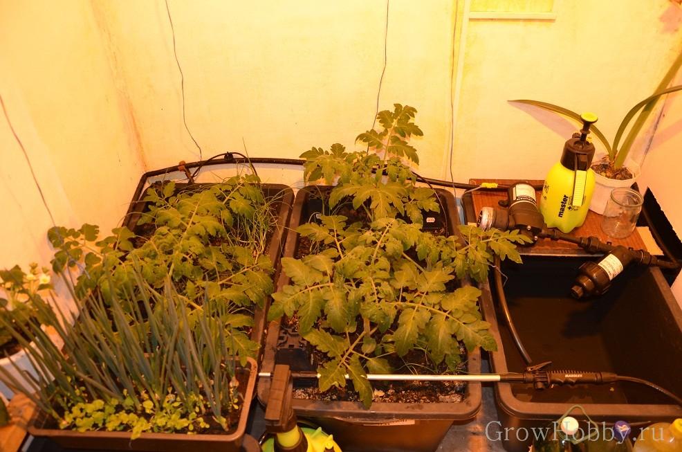 Овощной GrowHobby Report